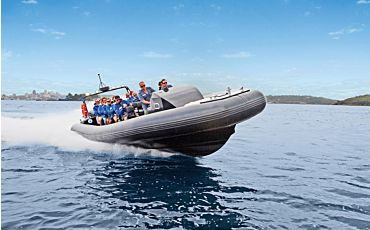 1.5 Hour Ocean Extreme Whale Watch from Manly