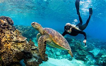 5 Day/4 Night Lady Elliot Island Package from Hervey Bay