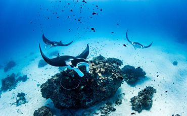 4 Day/3 Night Lady Elliot Island Package from Gold Coast