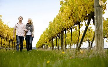 1 Day Natural Treasures Steam Trains and Great Wines Private Tour from Melbourne