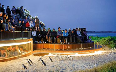 1 Day Phillip Island Penguins and Koalas Tour from Melbourne