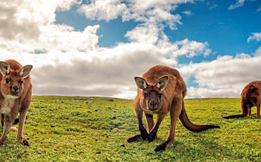5 Day/4 Night Adelaide and Kangaroo Island Discovery from Adelaide