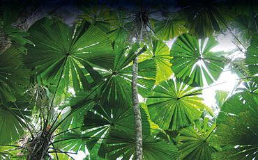 1 Day Daintree Experience Tour with Scenic Helicopter Tour from Cairns