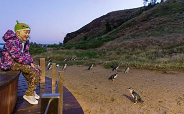 Half Day Phillip Island Penguins Up Late Evening Tour from Melbourne
