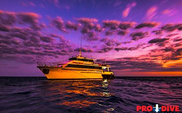 3 Day/2 Night Pro Dive Ocean Referral PADI Course from Cairns