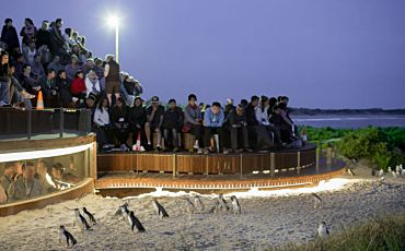 1 Day Phillip Island Penguins Parade Tour from Melbourne