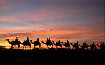 2.5 Hour Camel to Sunrise Tour from Ayers Rock Resort