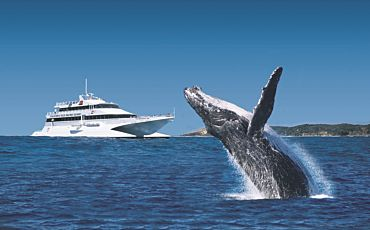 1 Day Classic Tangalooma Day Cruise with Whale Watching from Brisbane