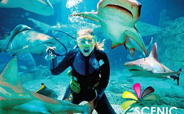 1 Day Scenic Underwater World Sealife Aquarium Tour from the Gold Coast