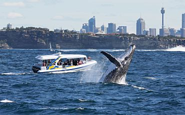 Totally Wild Whale Watch from Sydney