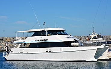 Western Australia Whale Watch Experience from Augusta