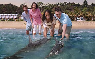 1 Day Premium Tangalooma and Wild Dolphin Feeding Experience from Brisbane
