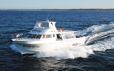 Half Day Mills Charters Whale Watching from Perth