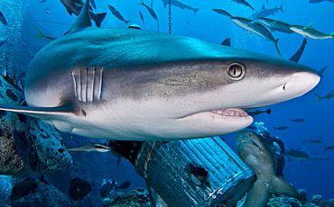 5 Day/4 Night Mike Ball Coral Sea Scuba Tour from Cairns