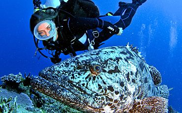 4 Day/3 Night Mike Ball Cod Hole and Ribbon Reef Scuba Tour from Cairns
