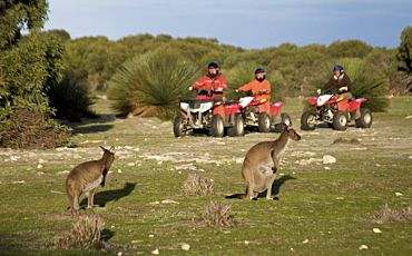 Outdoor Action Sunset Quad Bike Kangaroo Safari from Kangaroo Island