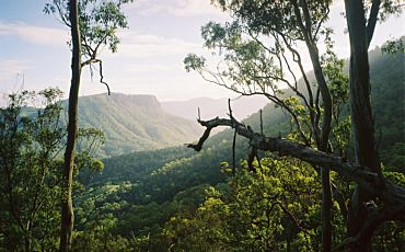 2 Day AAT Kings Hinterland Rainforest Retreat from Brisbane