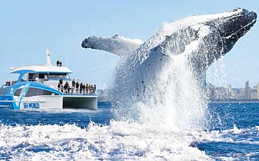 Sea World Whale Watch from Gold Coast