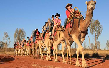 1.5 Hour Camel Express Tour from Ayers Rock Resort