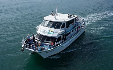 3 Hour Dolphin and Whale Cruise from Phillip Island