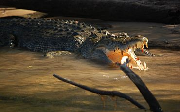 1 Day Offroad Dreaming Kakadu National Park Tour from Darwin