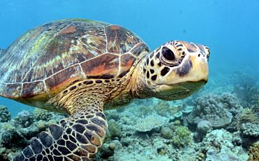 3 Day/2 Night Outer Barrier Reef Encounter from Cairns
