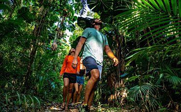 1 Day Daintree Rainforest Tour