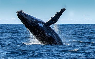 Rottnest Fast Ferries Whale Watching from Perth