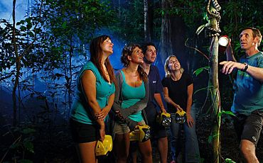 2 Hour Jungle Wildlife Night Walk Tour from Cape Tribulation
