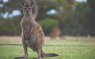 2 Day/1 Night Kangaroo Island Adventure Tour