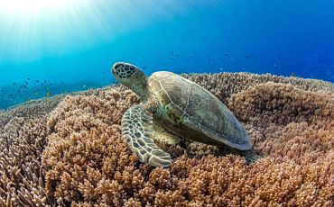1 Day Lady Elliot Island Tour from the Gold Coast