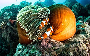 6 Day/5 Night Outer Barrier Reef Encounter from Cairns