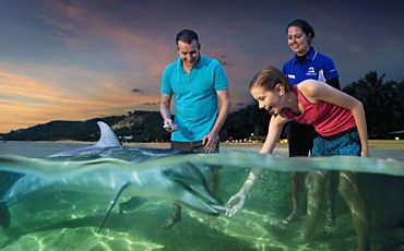1 Day Tangalooma Dolphin Viewing Cruise from Brisbane