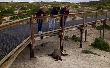 1 Day Seal Bay Small Group Tour from Kangaroo Island