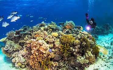 3 Day/2 Night Great Barrier Reef Liveaboard from Cairns