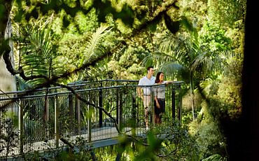 1 Day OReillys and Lamington National Park Tour from Brisbane and Gold Coast