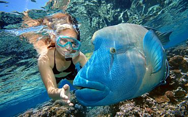 1 Day Reef Magic Moore Reef Tour from Cairns