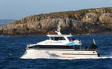 1 Day Killer Whale Expedition from Bremer Bay