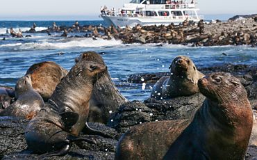 2 Hour Seal Watching Eco Cruise from Phillip Island