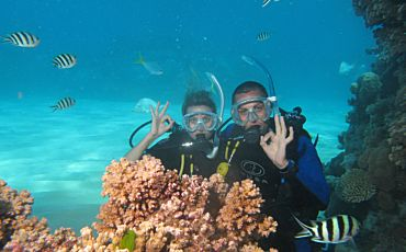 1 Day Silverswift Three Reef Adventure from Cairns