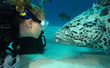 4 Day/3 Night Spirit of Freedom Scuba and Snorkel Tour from Cairns
