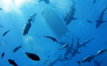 5 Day/4 Night Spirit of Freedom Scuba and Snorkel Tour from Cairns