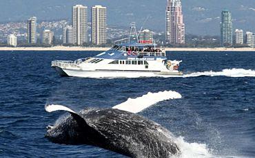 Spirit of Gold Coast Whale Watch