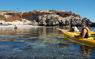 1 Day Seal and Penguin Islands Sea Kayak Tour from Perth