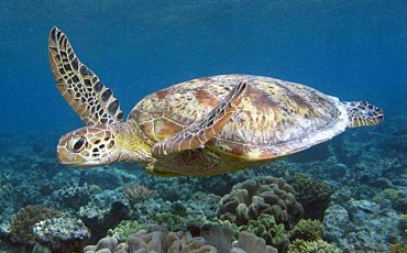 Half Day Calypso Low Isles Tour on the Great Barrier Reef from Port Douglas