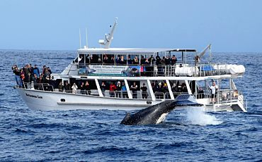 4 Hour Winter Whale Cruise from Phillip Island
